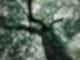 rs2 Keltisches Baumhoroskop